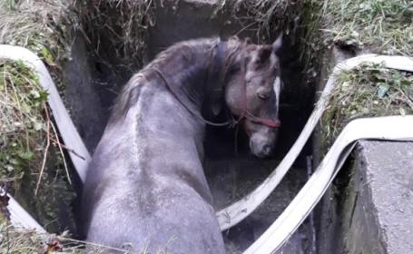 Cal salvat de pompierii maramureșeni după ce a căzut într-un canal