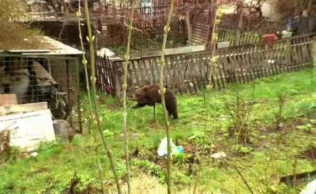 Avertisment lansat după ce un bărbat a fost sfâșiat de o ursoaică. Cum a fost găsit
