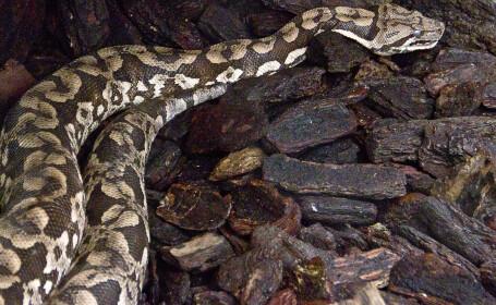 Femeie găsită moartă într-o casă în care se aflau peste 140 de șerpi