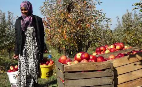 Fermierii maramureşeni preferă zilieri din Somalia sau Irak. \