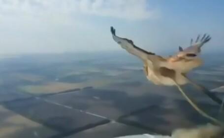 Pasare lovita de avion