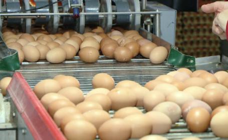 """Românii, în topul consumatorilor de ouă. """"Nu contează calitatea, contează doar prețul"""""""