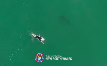 Rechin filmat la câțiva centimetri de un surfer. Ce s-a întâmplat