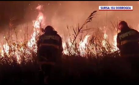 Incendiu uriaș în Delta Dunării. Pompierii nu își explică de la ce a pornit focul
