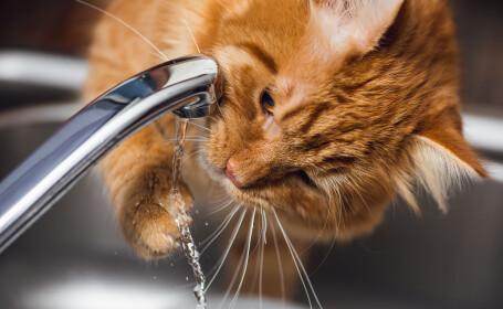 pisica apă