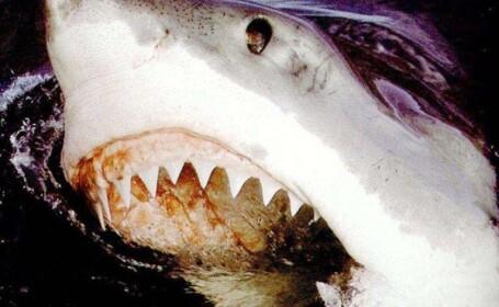 rechin
