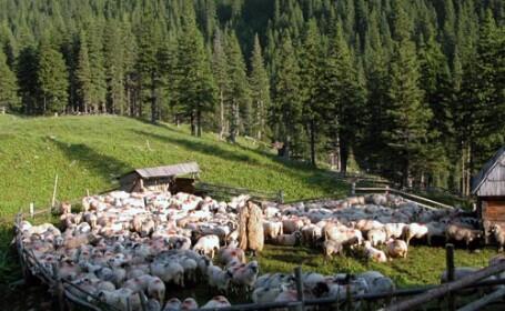 Americanii isi fac statiune rurala in Muntii Bihorului