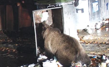 Ursii gunoieri au vizitat si un orasel din California