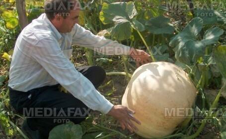 Un american a cultivat un dovleac de aproape o jumatate de tona!
