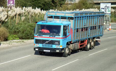 In Germania, pacientii obezi sunt transportati in camioane de animale