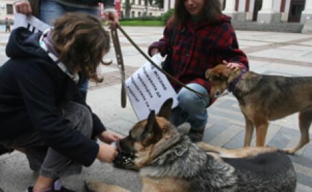 Protest al stapanilor de caini in capitala Bulgariei