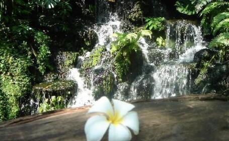 Gradinile Botanice din Singapore