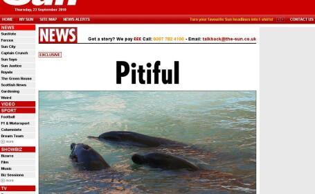 Delfini, pe post de animale de companie! Inoata in propriile excremente