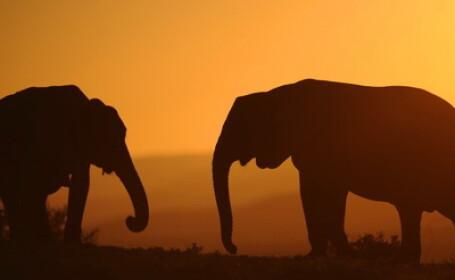India: 7 elefanti au fost omorati de tren incercand sa-si ocroteasca puii