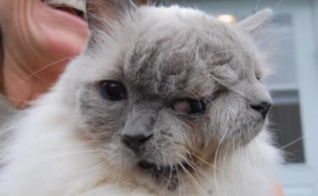 pisica cu doua capete