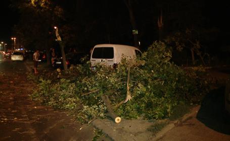 copac cazut timisoara
