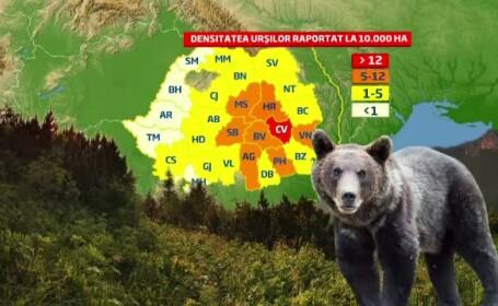 Cum au ajuns padurile din Romania suprapopulate cu animale si ce pericole se nasc din aceasta cauza