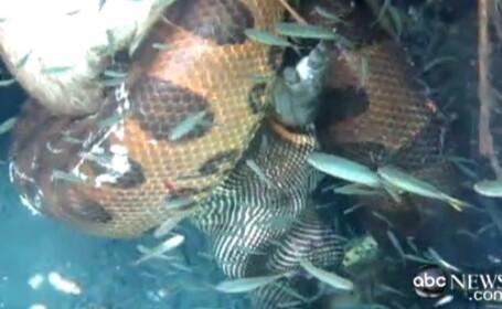 Imagini vazute pentru prima data. Descoperirea facuta de un ghid in apele Amazonului. VIDEO