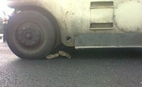 barbat calcat de camion