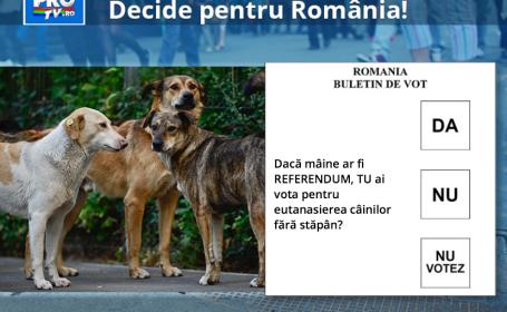 Esti sau nu de acord cu EUTANASIEREA cainilor maidanezi. Voteaza acum in aplicatia StirileProTV.ro