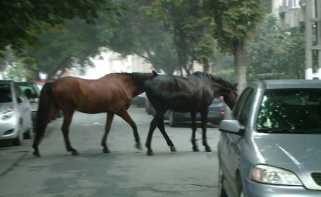 cai pe strada, timisoara