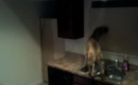 Cainele Houdini. Cum scapa un patruped din camera in care l-a incuiat stapanul. VIDEO