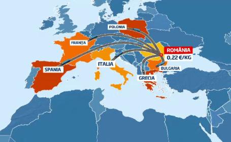 Cartofii romanesti iau drumul Europei. De ce platim mai mult pe un kg cand recolta e dubla