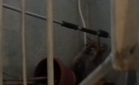 Momente de panica pentru locatarii unui bloc din Suceava.S-au trezit cu o vulpe la etajul patru