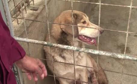 Primele pedepse pentru cei care au abandonat cainii adoptati. Ce a patit o femeie din Ploiesti