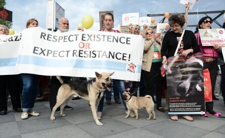 Proteste fata de eutanasierea cainilor maidanezi