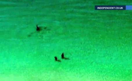Cuplu urmarit de un rechin-ciocan aproape de mal, in Florida. Cum s-a terminat \