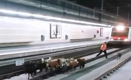 capre