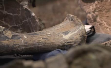 Descoperire uriasa, la propriu, facuta de un paleontolog, in Argentina. Animalul cantarea 65 de tone