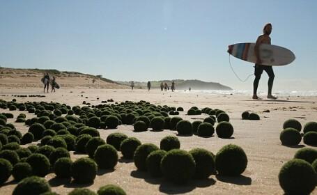 Misterul bilelor verzi de pe o plaja din Australia. \