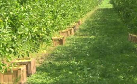 pomicultura