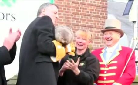Primarul New York-ului, aratat cu degetul pentru moartea unei... marmote celebre. Bill de Blasio a scapat-o din brate