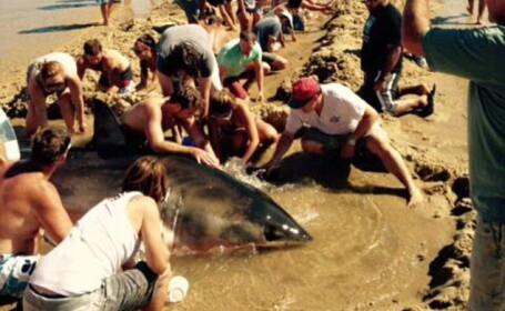 Momentul in care mai multe persoane incearca sa salveze un rechin esuat pe o plaja. Ce s-a intamplat in final. VIDEO