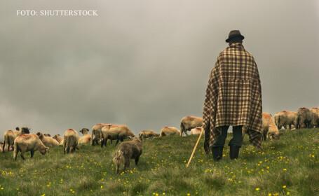 Operatiune de cautare in Timis dupa ce un cioban a anuntat la 112 ca este batut si s-a pierdut