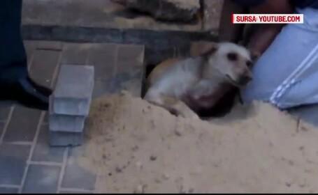 Muncitorii din Rusia au astupat o gaura in trotuar, fara sa stie ca acolo e un caine. Ce s-a intamplat cu animalul