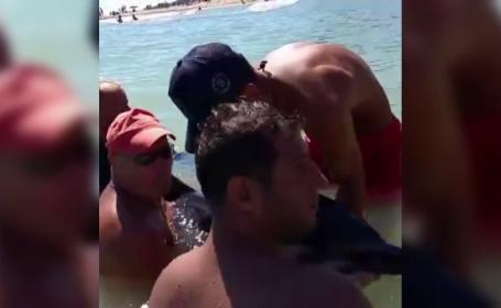 Scene dramatice la Eforie Sud, unde turistii au incercat sa salveze un delfin esuat. Cum s-a incheiat operatiunea