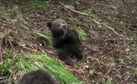 orfelinat ursi