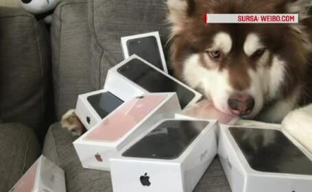 Catel cu iPhone-uri