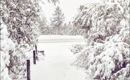 ninsoare siberia