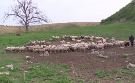 Un cioban a sunat la Poliție și a spus că e posibil să fi comis o crimă