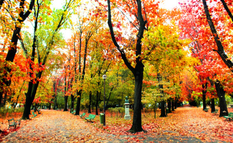peisaj de toamna in parc