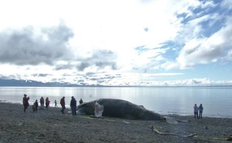 balena alaska