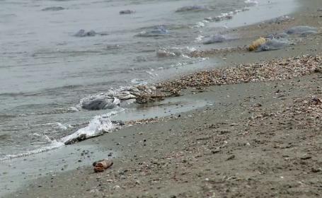 Marea Neagră riscă să ajungă printre cele mai poluate mări din Europa