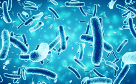 Bacterii
