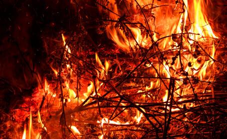 Incendiul din pădurea de pe Tâmpa provocat de o ţigară nestinsă
