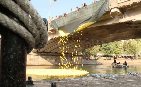 """Motivul pentru care râul Bega a fost umplut cu rățuște din plastic. """"Era o necesitate"""""""